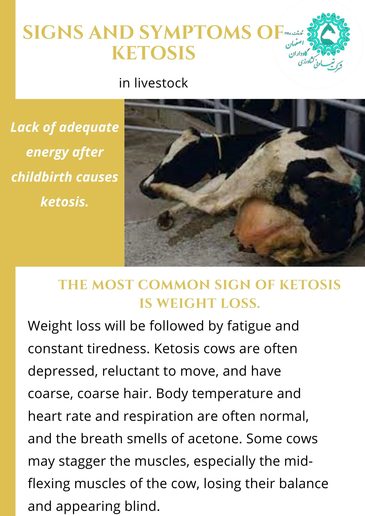 Ketosis due to lack of livestock